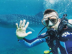 Diving with whale sharks at Cebu Island