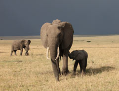 Top Billing explores the Maasi Mara