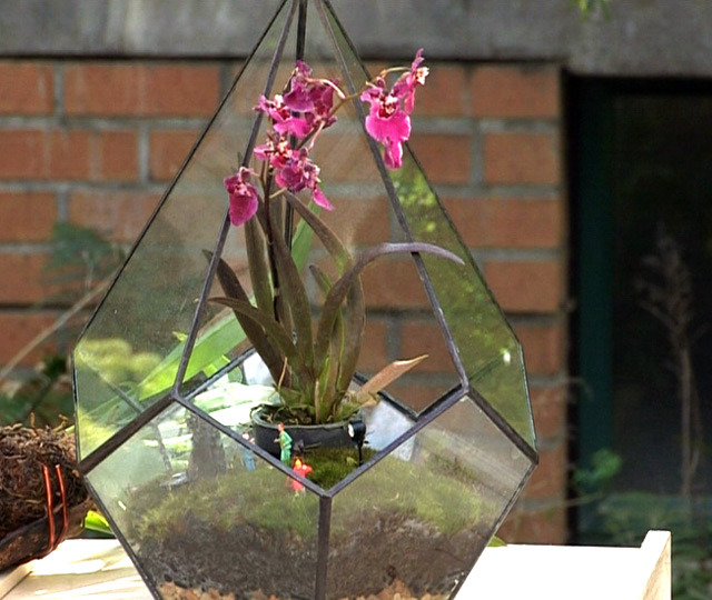 Make your own Terrarium