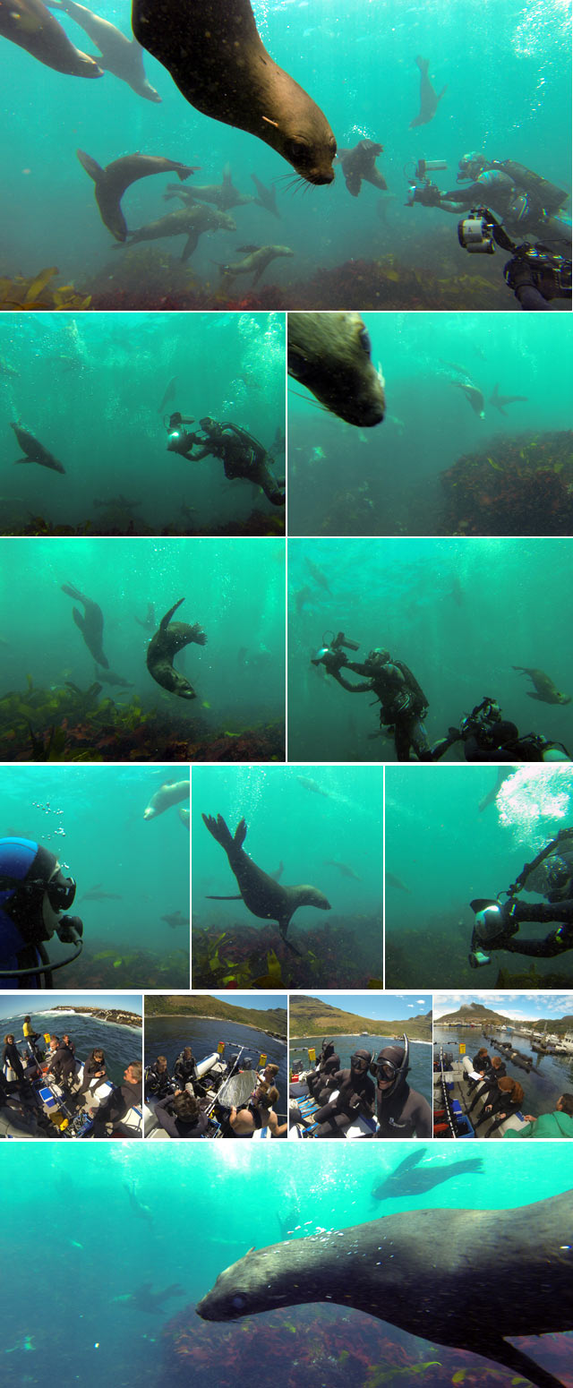 Top Billing goes diving with the seals