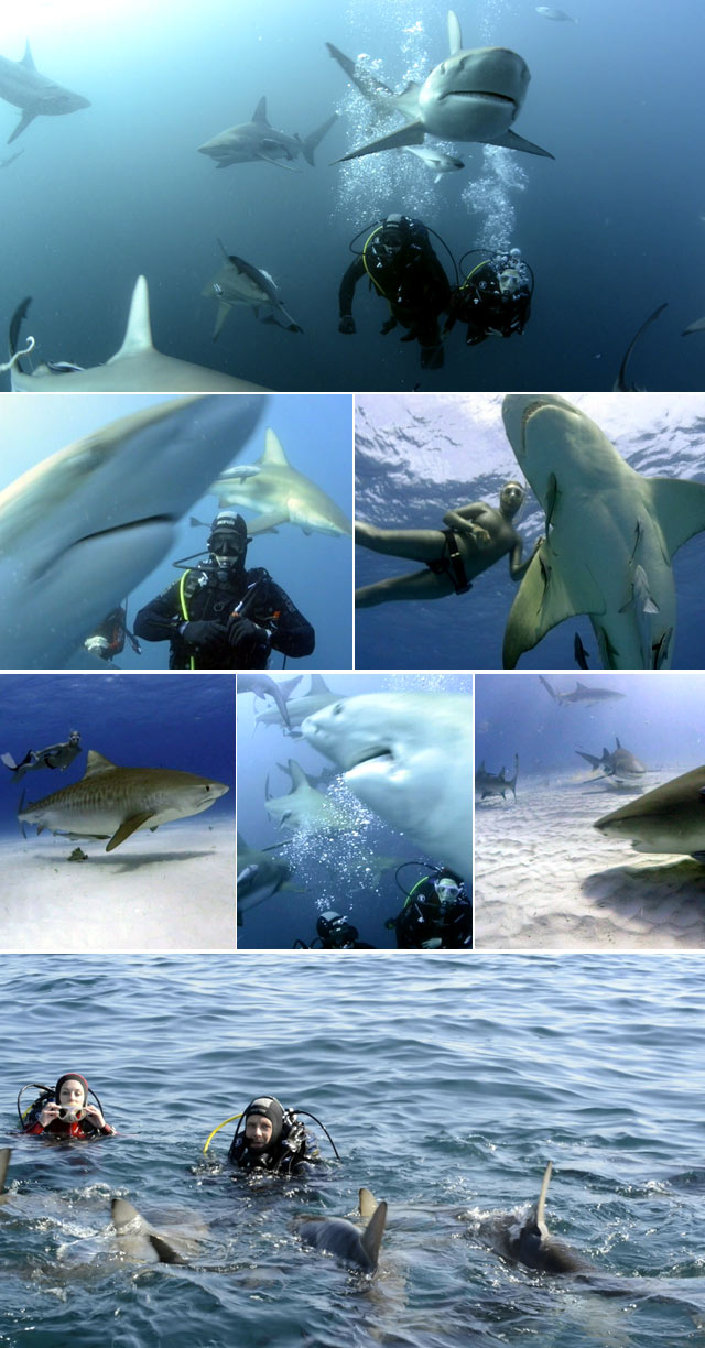 Diving with sharks on Top Billing