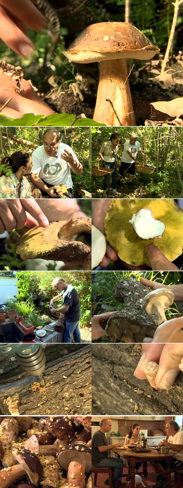 Mushroom picking on Top Billing