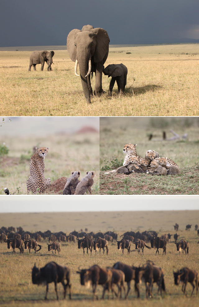 Top Billing visits the Maasi Mara