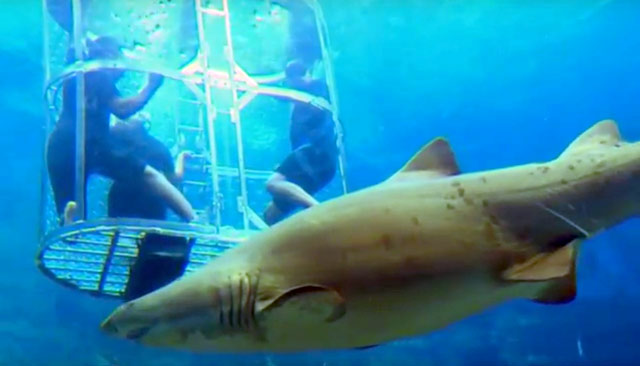 Uzalo goes shark cage diving on Top Billing  2