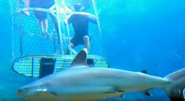 Uzalo goes shark cage diving on Top Billing  3